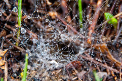 Water drops on spider web Stock Photography