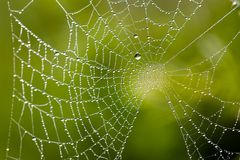 Water drops on spider web needles extreme macro crop stock photography