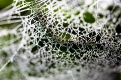 Water drops on spider web needles extreme macro crop stock images