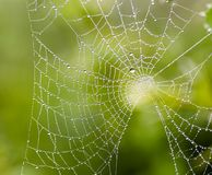 Water drops on spider web needles extreme macro crop royalty free stock photo