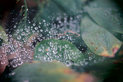 Water Drops on a Spider Web. These drops of water are suspended on the intricate pattern of this spider web Stock Photo