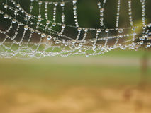 Dew drop and spider web Stock Images