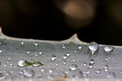 Water drops on succulent stock photo