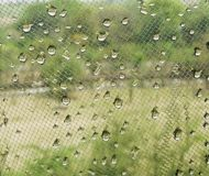 Water drops on window net mesh with green trees on background. Nature texture background Stock Photo