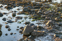 Water Edge with stones, seaweed and moss. Water Edge with many stones, seaweed and moss Royalty Free Stock Photo