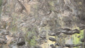 Water Effect 1 stock video footage