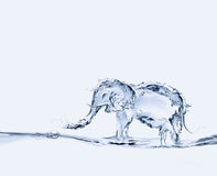 Water Elephant Stock Photography