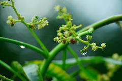 Water en bloem stock foto's