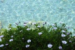 Water en bloemen Royalty-vrije Stock Foto