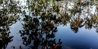 Water en boomschaduwen stock afbeeldingen