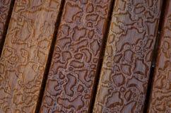 Water en hout Stock Fotografie