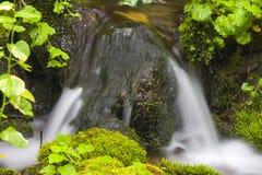 Water en mos Royalty-vrije Stock Afbeelding