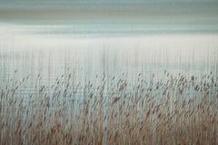 Water en riet Stock Fotografie