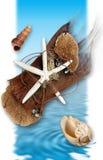 Water en shells Royalty-vrije Stock Afbeelding