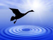 Water en zwaan stock illustratie