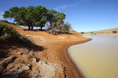 Water equals green in Sossusvlei Stock Photography