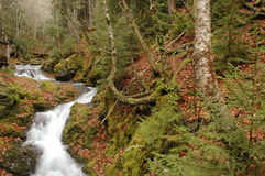 Water fall. Streams of water flowing from a forest Stock Photography
