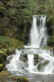 Water fall. Streams of water flowing from a forest Stock Images