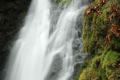 Water fall. Streams of water flowing from a forest Royalty Free Stock Photography