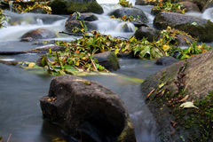 Water fall of a creek Royalty Free Stock Image