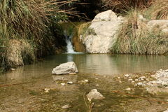 Water fall at ein gedi israel Royalty Free Stock Images