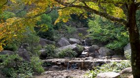 A water fall flows over rocks in a lush green autumn Japanese forest. stock video footage