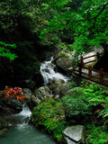 Water fall of forest. A small river water fall Royalty Free Stock Photo