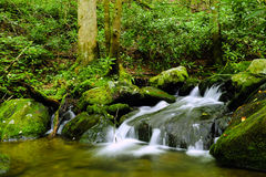 Water Fall Great, Smoky Mountains National Park Stock Photos