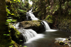 Water Fall in the Hawaii Tropical Botanical Garden Stock Photos