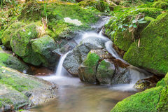 Water fall. Mountain stream among the mossy stones Royalty Free Stock Photos