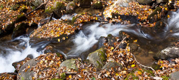 Water fall. Silk-like water flow over the rocks and leaves Stock Photo