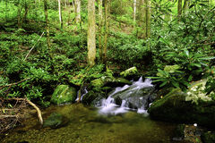Water Fall in Smoky Mountain National Park Royalty Free Stock Photos