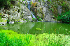 Water fall and vegetation Royalty Free Stock Images