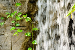 Water fall. Vines beside the waterfall Stock Photo