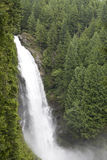 Water fall waterfall forest royalty free stock photos