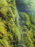 Water falling down cliff covered with ferns Stock Photo