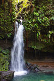 Water Falling into a Pool from a Jungle Stream Royalty Free Stock Photography