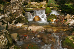 Water falls. Cascade in the medium of nature Royalty Free Stock Photography