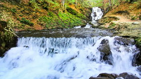 Water falls over rocks through the dense fern undergrowth of a Carpathian forest. Water falls over rocks through the dense fern undergrowth of a forest stock video