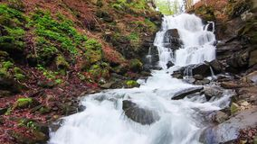 Water falls over rocks through the dense fern undergrowth of a Carpathian forest. stock footage