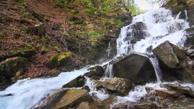 Water falls over rocks through the dense fern undergrowth of a Carpathian forest. stock video footage