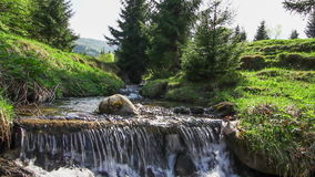 Water falls over rocks through the dense fern undergrowth of a Carpathian forest. stock video