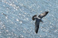 Water, Fauna, Bird, Seabird royalty free stock photo