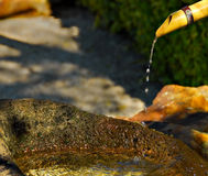 Water feature. A japanese garden water feature royalty free stock photos