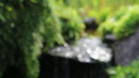 Water Feature and Greens Plants with Soothing Sound of Fountain in Garden Royalty Free Stock Photos