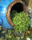 Water Feature in a Garden. Water feature made of blue pot tipped on it`s side Royalty Free Stock Photos