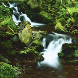 Water and Ferns. Waterfall on Exmoor surrounded by Ferns Royalty Free Stock Photo