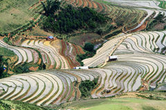 Water filled on terraced fields. Stock Photos