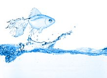 Water fish Stock Image