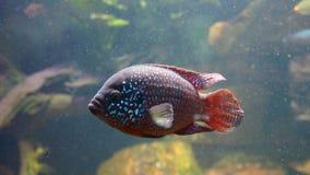 Water, Fish, Marine Biology, Underwater royalty free stock photos